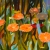 "RBG Lily pads, 30"" x40"", acrylic on canvas, © Donna Grandin."