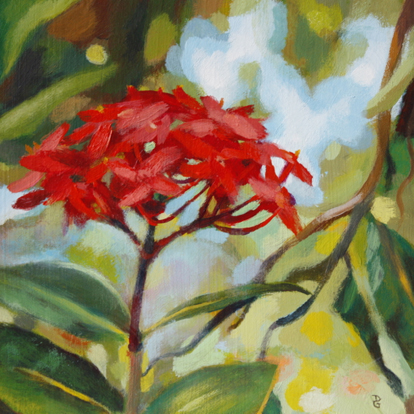 "Red ixora, 6""x6"", acrylic on canvas, © Donna Grandin. SOLD"
