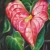 "Valentine anthurium, 8""x8"", acrylic on canvas, © Donna Grandin. $250. black frame"